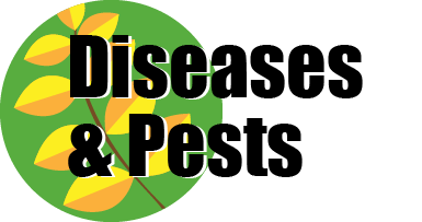 Diseases & Pests